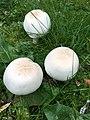 Fungi-know.jpg