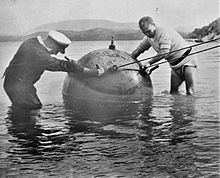 Two sailors stand next to a large round naval mine in shallow water.
