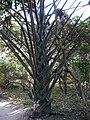 Gambia06Bijilo0006 (5420462839).jpg