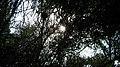 Garden Way - Wall - trees - streamlet - 17 Shahrivar st - Nishapur 11.JPG