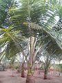 Garden at saraswathi illam,palavangudi jpg 38.jpg