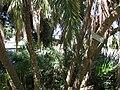 Gardenology.org-IMG 0343 rbgs10dec.jpg