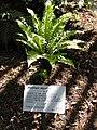 Gardenology.org-IMG 0825 rbgs10dec.jpg