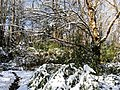 Georgia snow IMG 4748 (25075962118).jpg