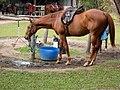 Get Ready, Horses! (2672001616).jpg