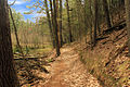 Gfp-wisconsin-rocky-arbor-state-park-hiking-trail.jpg