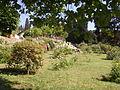 Giardino delle rose 11.JPG