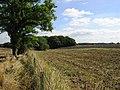 Gillsike Plantation - geograph.org.uk - 549832.jpg
