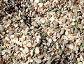 Glass beach 1.JPG