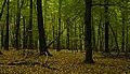 Gliwice Las Dabrowa forest.jpg