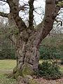 Gnarled tree (7104399711).jpg