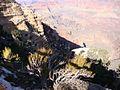 Grand Canyon 2011 024.jpg