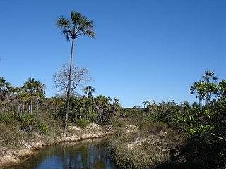 Grande Sertão Veredas National Park