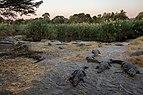 Granja de cocodrilos, Maun, Botsuana, 2018-08-01, DD 51.jpg