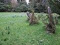 Gravestones and snowdrops - geograph.org.uk - 345265.jpg