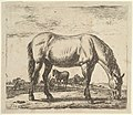 Grazing Horse, from Different Animals MET DP828087.jpg