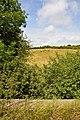 Grazing on Rectory Farm - geograph.org.uk - 1986518.jpg