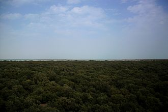 Flora of Qatar - Mangroves in Al Thakhira