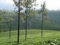 Green slopes,valparai,tamilnadu - panoramio.jpg