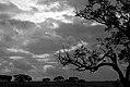 Grey sky (3242130462).jpg