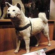 Big Stuffed Dog Toy