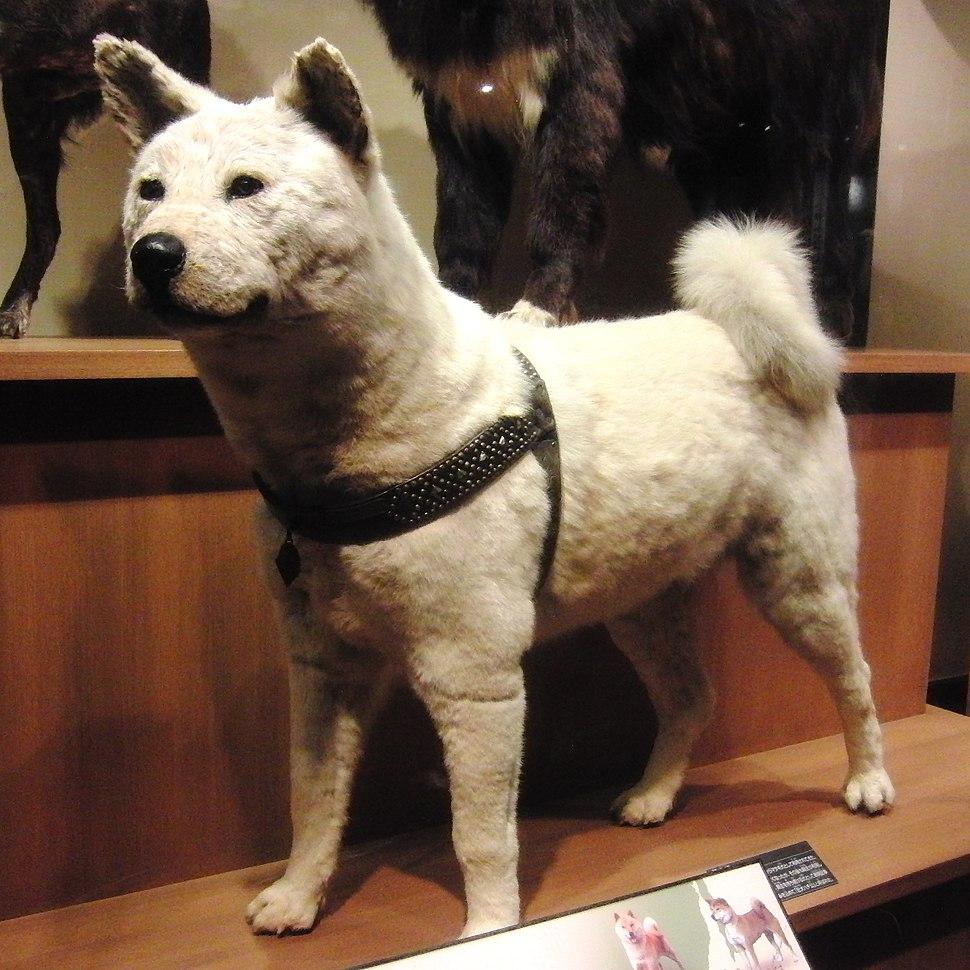 Hachikō - Howling Pixel