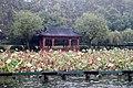 Hangzhou-Westsee-04-Lotus-2012-gje.jpg