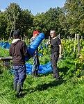 Harvesting grapes in Chateaux Luna vineyard 2.jpg