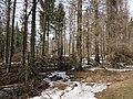 Harz near Bodebruch 14.jpg