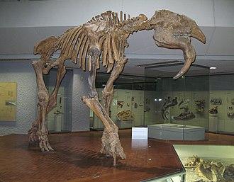 Prodeinotherium - Image: Hauerelefant Deinotherium