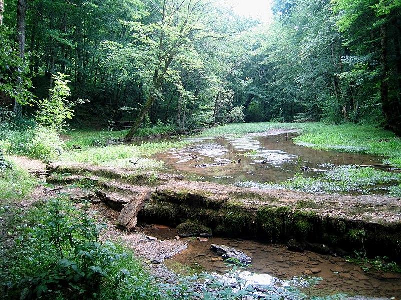Haute-Marne Praslay Source De L'Aube 09072008