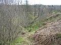 Haw Cleugh, Kielder Forest - geograph.org.uk - 1271988.jpg