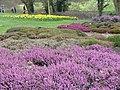 Heather Garden, RHS Wisley - geograph.org.uk - 711120.jpg