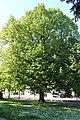 Heilbronn Friedenspark 8071.JPG