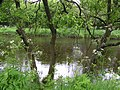 Hemlock, trees and water - geograph.org.uk - 1309177.jpg