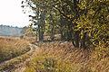 Herbst Elfenmmeer 4.jpg