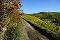 Herbstlicher Spaziergang durch die Becksteiner Weingärten. 17.jpg