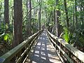 Highland Hammocks SP Swamp Trail02.jpg