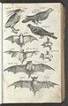 Historiae Naturalis De Auibvs Libri VI 1650 (46864606).jpg