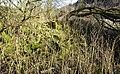 Holehouse Miller's house ruins, Sorn, East Ayrshire.jpg