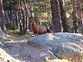 Horse .Puerto de Navacerrada.Madrid.jpg