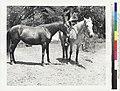 Horse and rider - Pliny E. Goddard.jpg