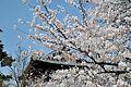 Horyuji Temple 05.JPG