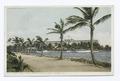 Hotel Royal Palm from Picknill's Point, Miami, Fla (NYPL b12647398-73854).tiff