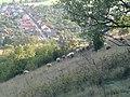 Hrad Krasna Horka - panoramio - Tomas Jancovic (1).jpg