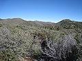 Hualapai Mountains (12890712964).jpg
