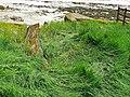 Hulk, Ships Graveyard, Purton, Gloucestershire (5) (geograph 3006961).jpg