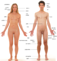 Human anatomy in Moksha.png