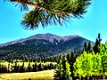 Humphreys Peak from AZ Snowbowl.JPG