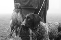 Hunter with dog and kill during a driven hunt Netherlands 01.png